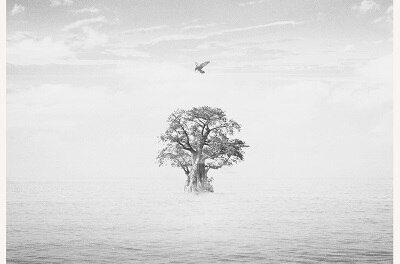 Японский альбом EXO — Bird